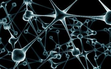 Nerve cell Mac wallpaper