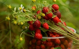 Wild Strawberry Mac wallpaper