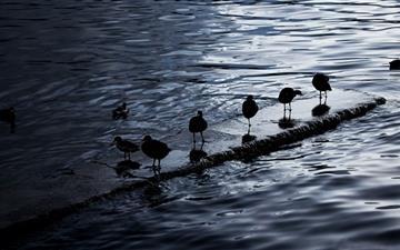 Birds Lake Titicaca Bolovia Mac wallpaper