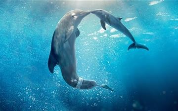 Dolphin Tale Movie Mac wallpaper