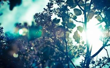 Leaves Mac wallpaper