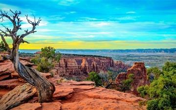 Monument Canyon Colorado Tree Mac wallpaper