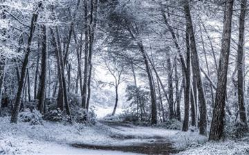 Unexpected Snowfall Mac wallpaper