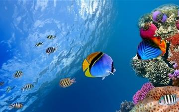Underwater Coral Scene Mac wallpaper