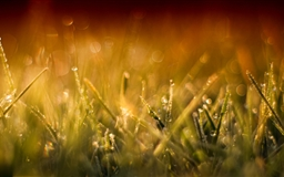 Grass Macro Mac wallpaper