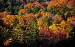 Hachimantai Forest Mac wallpaper