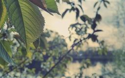 Wild Plant Mac wallpaper