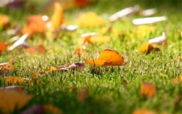 Carpet Of Leaves Mac wallpaper