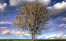 Beautiful Tree Spring Mac wallpaper