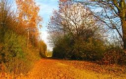 Autumn Wild Mac wallpaper