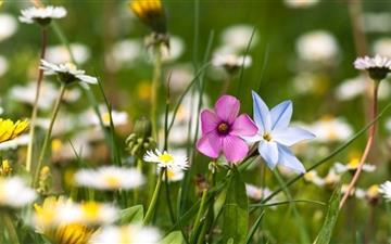 Flowers Field Mac wallpaper