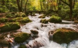 Forest Stream Mac wallpaper