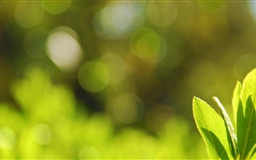 Green Leaves  Mac wallpaper