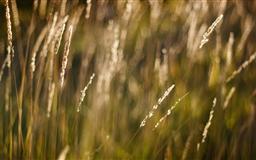Long Grass Bokeh Mac wallpaper