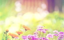 Marigold Lilac Purple Flowers Mac wallpaper