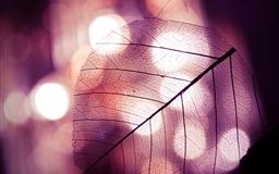 Leaf Mac wallpaper