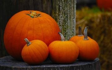 The Pumpkins Mac wallpaper