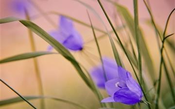 Blue Wild Flowers Mac wallpaper