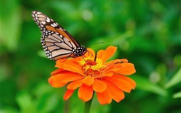Butterfly 10 Mac wallpaper