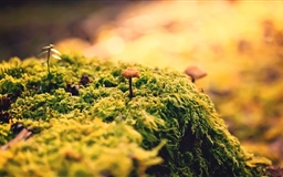 Beautiful Close-Up Moss Mac wallpaper