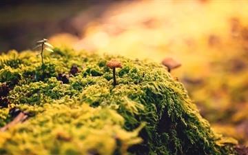 Beautiful Close-Up Moss Mac wallpaper