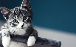 Cute Baby Cat Wallpaper