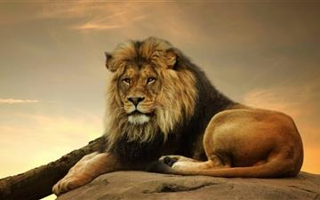 Big Lion On Stone  Mac wallpaper