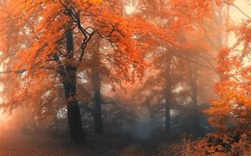 Autumn 19 Mac wallpaper