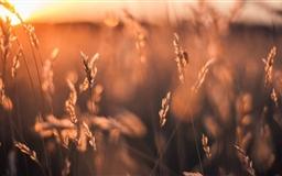 Golden Sun Rays Field Mac wallpaper