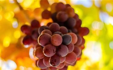 The Grapes Mac wallpaper