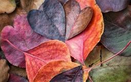 Fall In Love Mac wallpaper