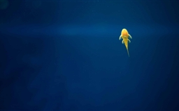 Armenia Fish