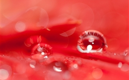 Beautiful  A Red Flower Mac wallpaper