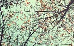 Trees Ants Eye View Mac wallpaper