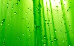 Green Drops Mac wallpaper