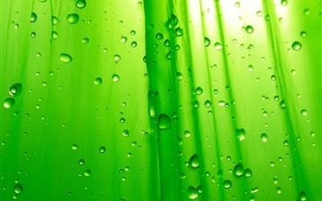 Green Drops Mac wallpaper