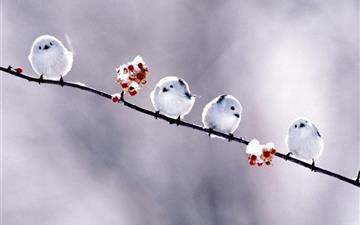 Flowers birds Mac wallpaper