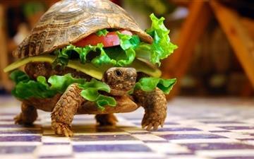 Cheese Turtle Burger  Mac wallpaper