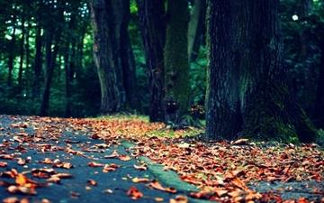 Leaves On The Road Mac wallpaper