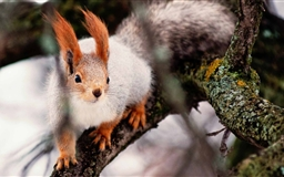 Nimble Squirrel Mac wallpaper