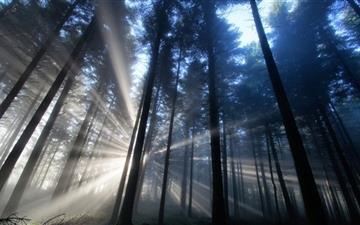 Forest Light Rays Mac wallpaper