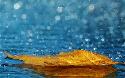 Yellow Leaf In The Rain Mac wallpaper