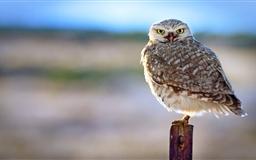 Backlit Owl Mac wallpaper