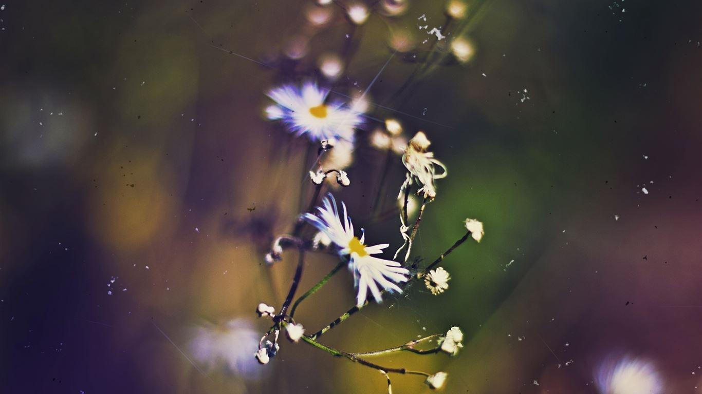 Flowers 53 mac wallpaper download free mac wallpapers - Flower wallpaper macbook ...