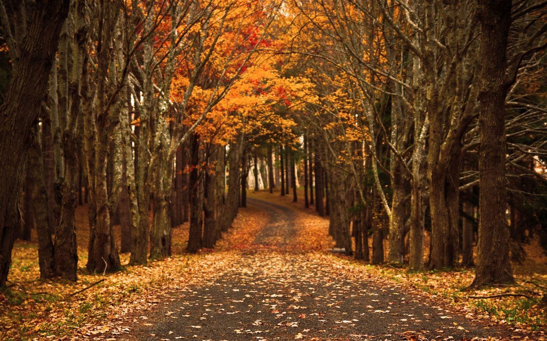 Late Autumn Mac Wallpaper Download | Free Mac Wallpapers ...