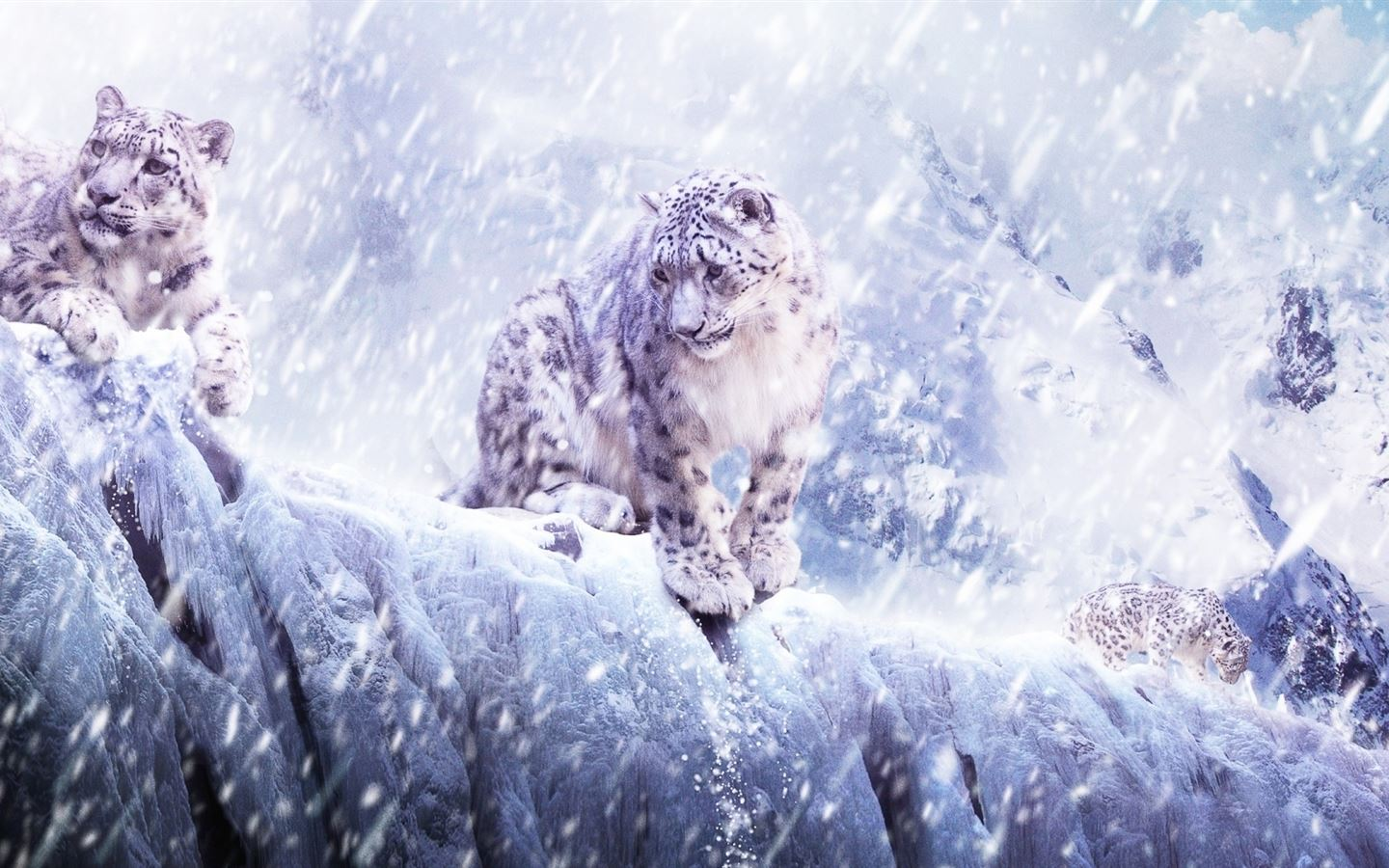 Leopards In The Snow Mac Wallpaper Download Allmacwallpaper