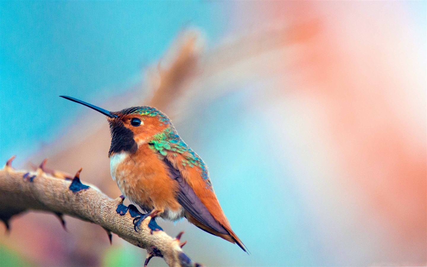 Most Beautiful Birds Macbook Air Wallpaper Download Allmacwallpaper
