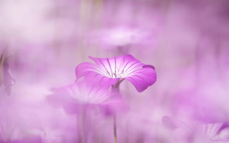 Purple flowers tumblr mac wallpaper download free mac - Flower wallpaper macbook ...
