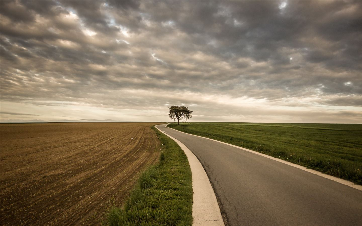 Roadside Tree Nature Mac Wallpaper Download | Free Mac ...
