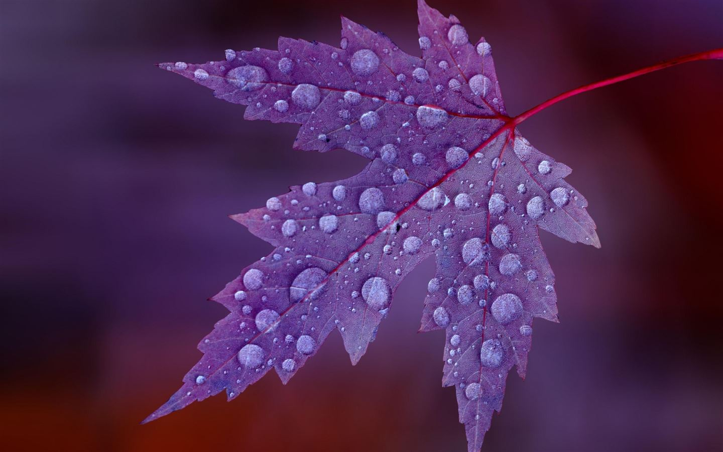 The Leaves After The Rain Mac Wallpaper Download Free